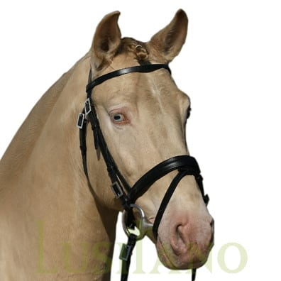 Combined-English-bridle-3w