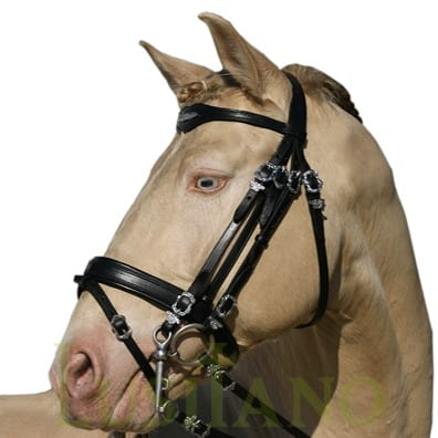 Combined-English-bridle-BD-4w