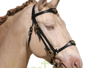 Combined Portuguese-German bridle B