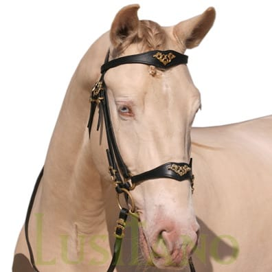 Portuguese-German-bridle-2w