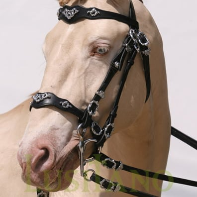 Traditional-Baroque-bridle-D-2w