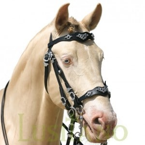 Traditional Baroque bridle D
