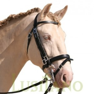 English Portuguese bridle D