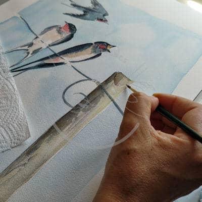 Barn swallow Print